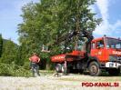 Obžagovanje dreves v Desklah